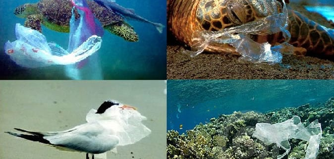 Embracing The Plastic Bags Ban For Tourism Facilities