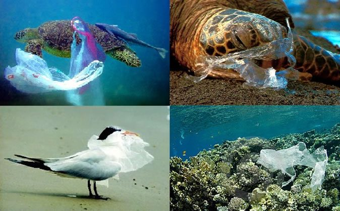 impact of use of plastic bags on environment introduction